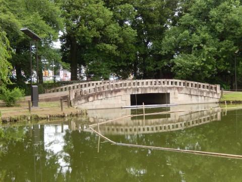 行田にある水城公園の「あおいの池」はホテイアオイの名所