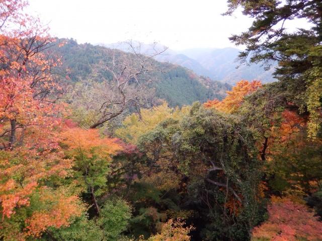 高尾山の紅葉の風景