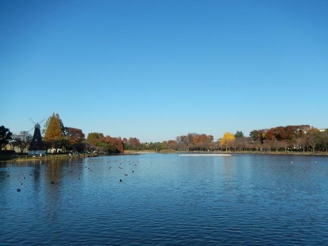 浮間公園の浮間ヶ池