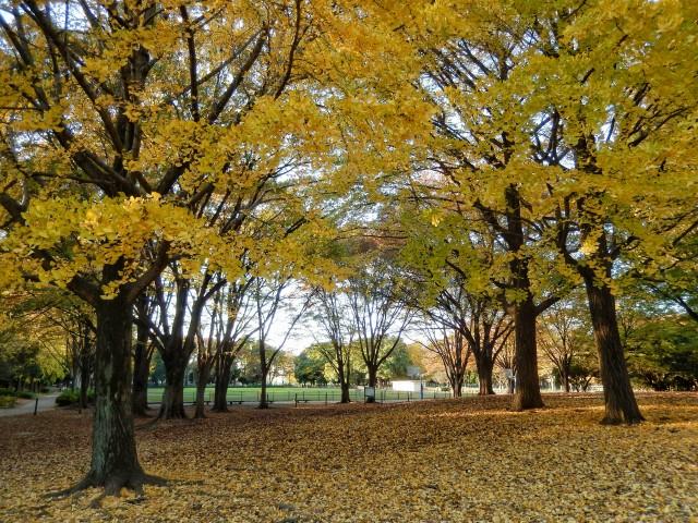 東京都板橋区「赤塚公園」の紅葉といちょう並木③