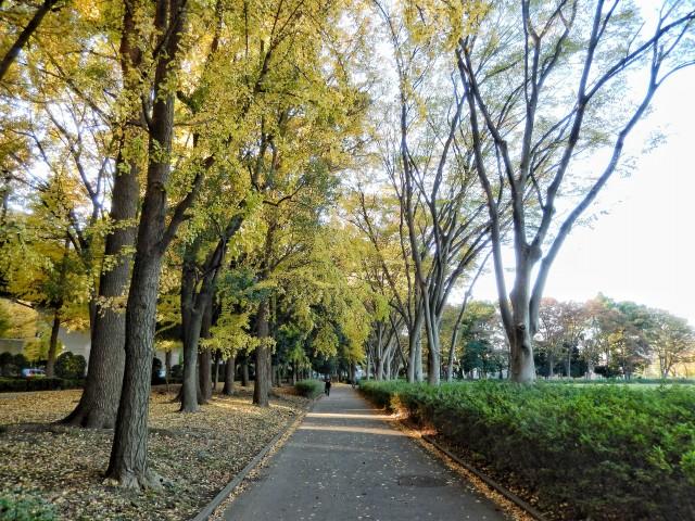 東京都板橋区「赤塚公園」の紅葉といちょう並木①