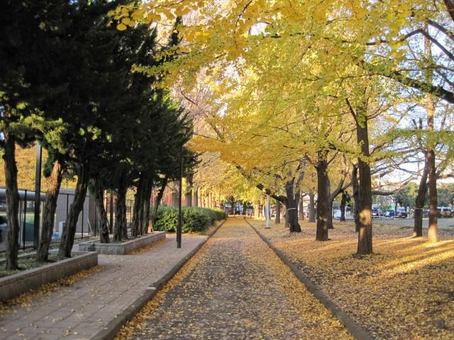 東京都板橋区「赤塚公園」の紅葉といちょう並木②