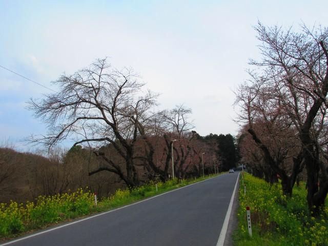 北本にある桜の名所「城ヶ谷堤」①