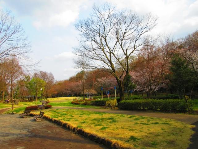 桶川にある桜の名所「城山公園」③