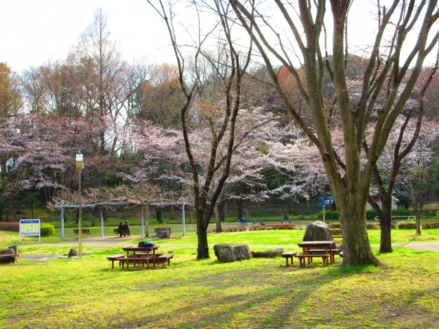 桶川にある桜の名所「城山公園」④