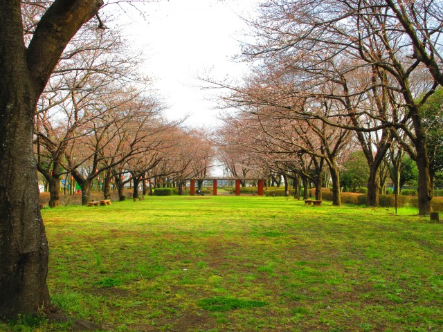 桶川にある桜の名所「城山公園」⑤