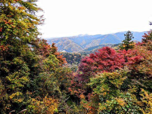 高尾山の紅葉③