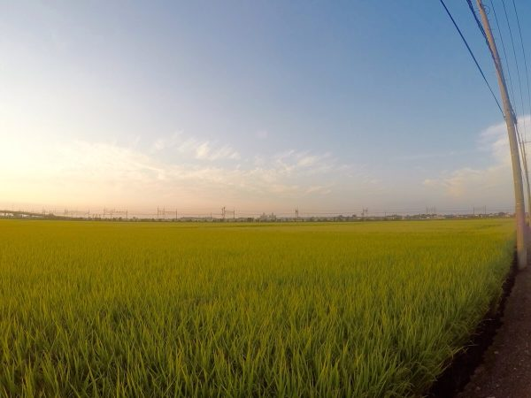 南古谷の田園風景