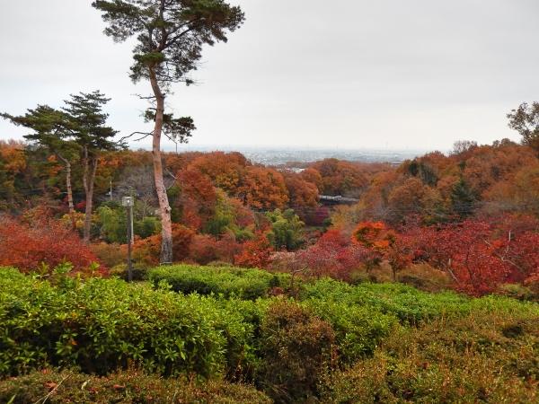 物見山公園から見える紅葉風景