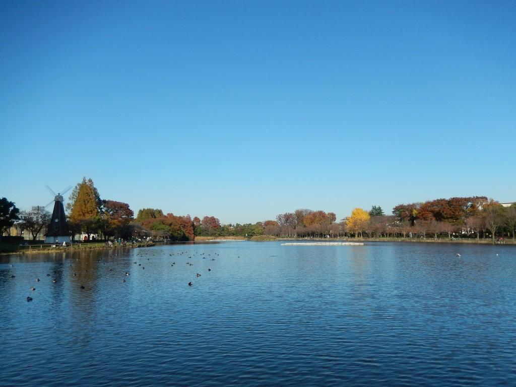 浮間公園は東京都内で桜や紅葉、釣りを楽しめるスポットですよ。
