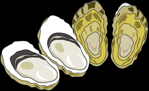 牡蠣で食中毒を起こしやすい時期は?ノロウイルスに感染した時の症状。