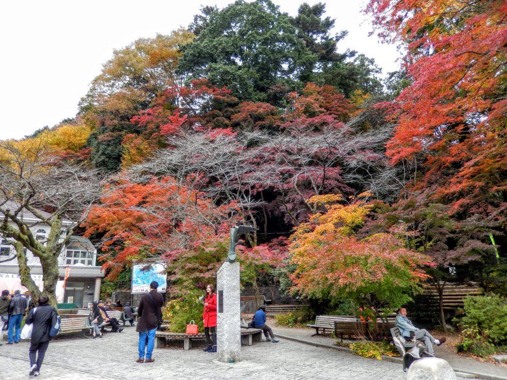 高尾山の紅葉の見頃はいつ?どのくらい混雑するの?