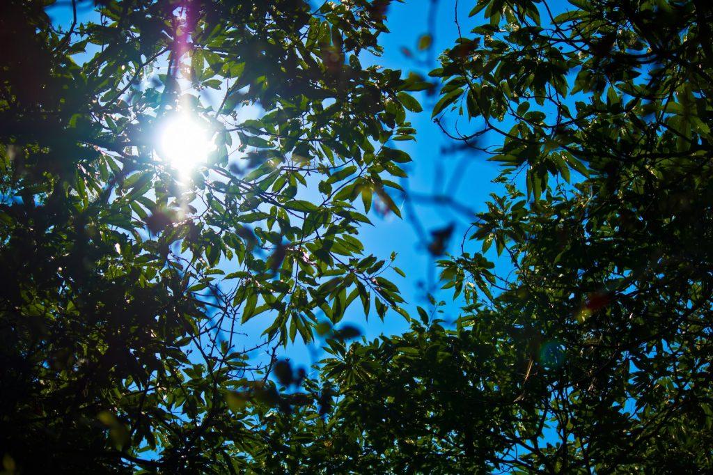 暑さ指数からみる熱中症対策。炎天下での運動は禁止レベル?