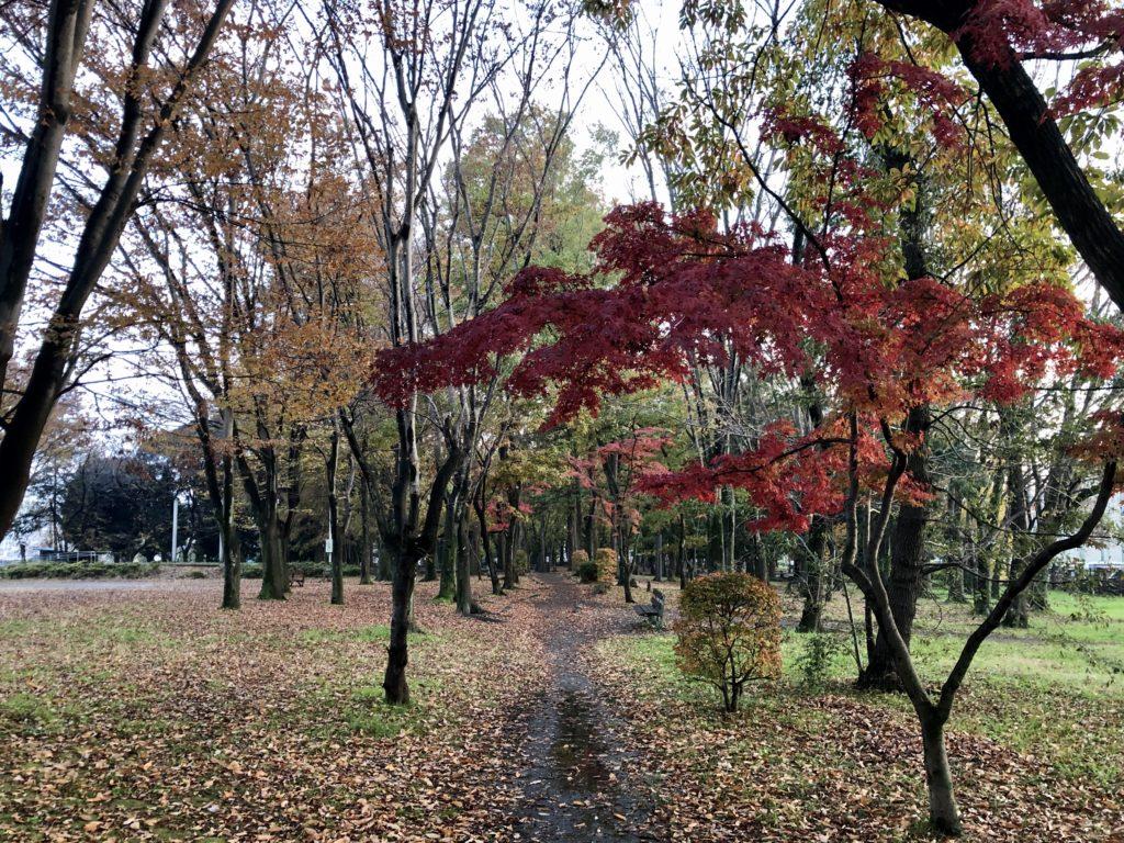 2019.11 Isanuma Park